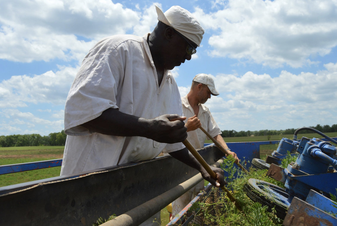 Prisoners from the Darrington Unit in Texas work on a farm in early 2020.