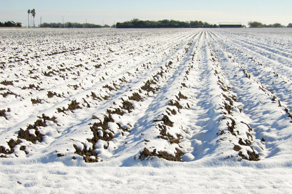 A rare storm dumped up to 13 inches of snow in southeast Texas on Dec. 24, 2004.