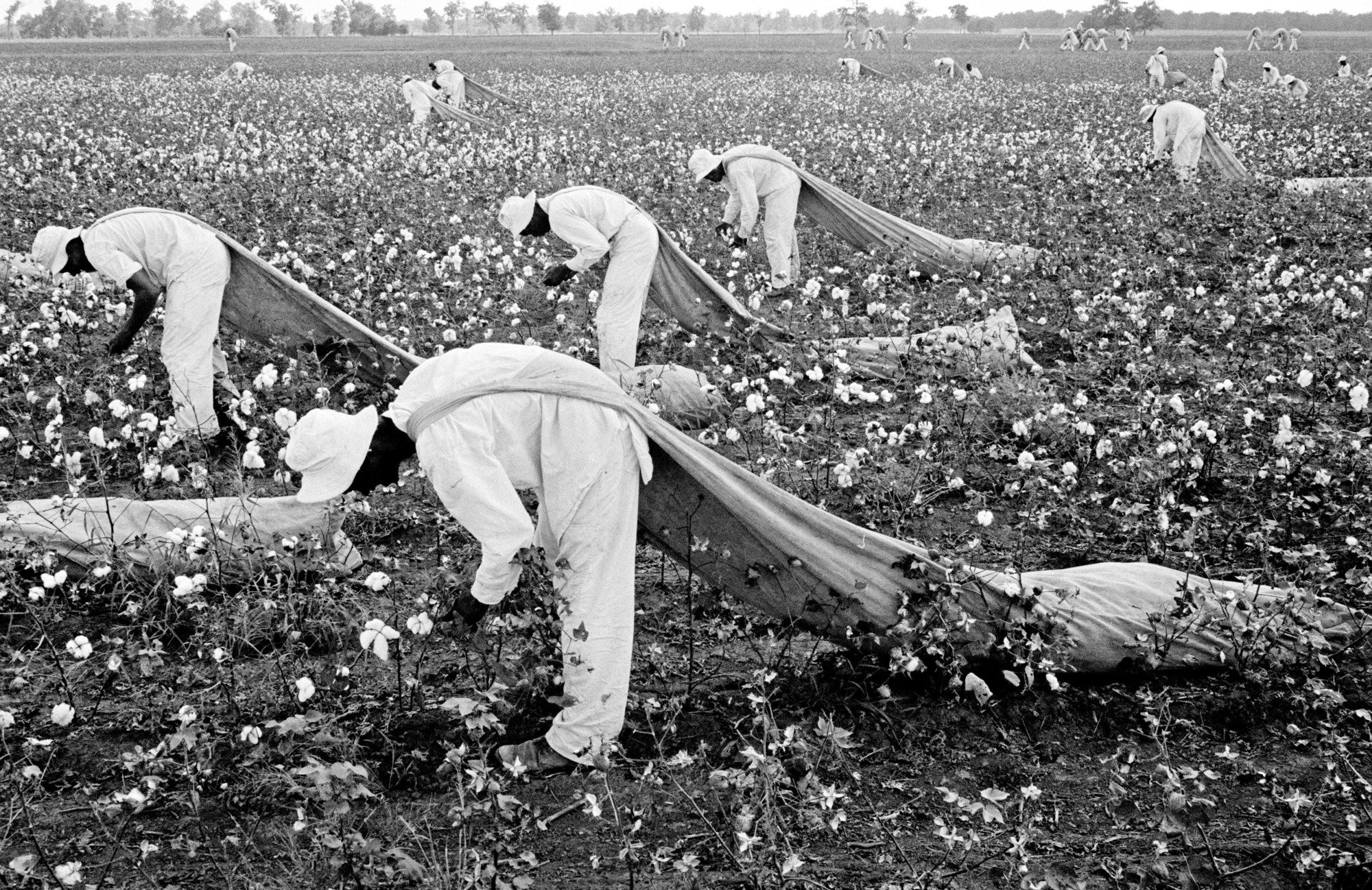 Prisoners from the Ferguson Unit picking cotton outside of Huntsville, Texas, in 1968. The unit was named after James E. Ferguson, a governor in the 1910s with a troubled record of condoning  anti-Mexican violence.